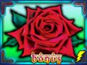 arabian-rose3