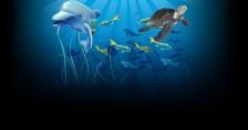 DolphinReef_BG